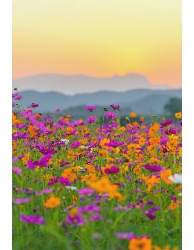Glückwunschkarte ohne Text - Blumen...